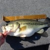 Tony Todd's 8.3LB Large Mouth Bass
